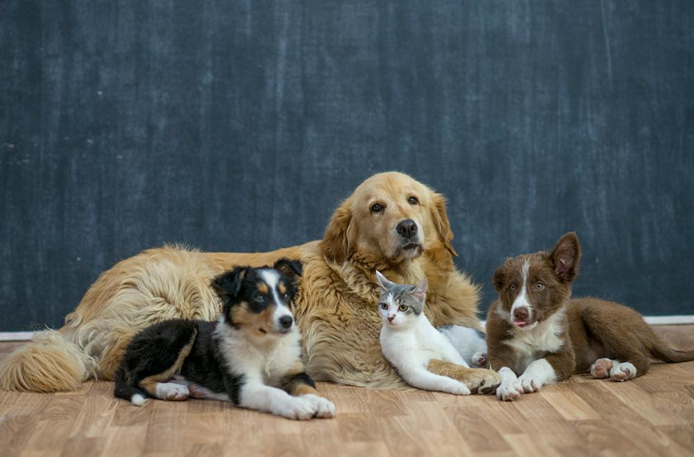 PALS SPAY & NEUTER PROGRAM - Edmonton Humane Society