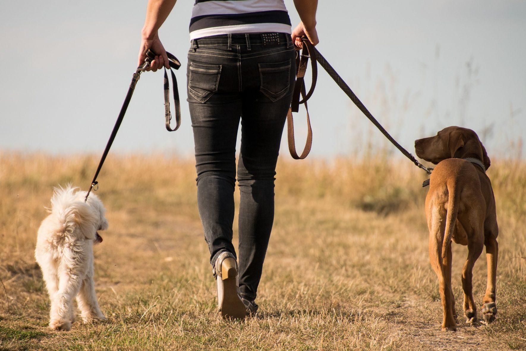 DOGS - Edmonton Humane Society