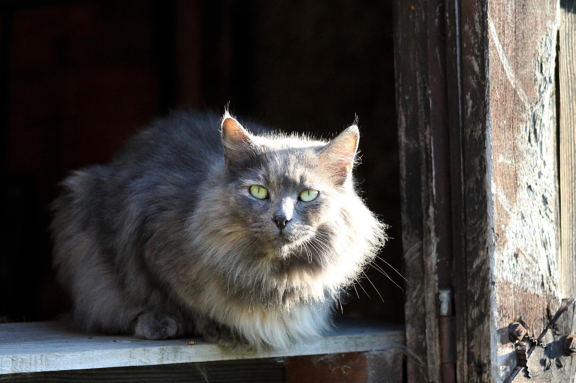 barn-buddy-cat