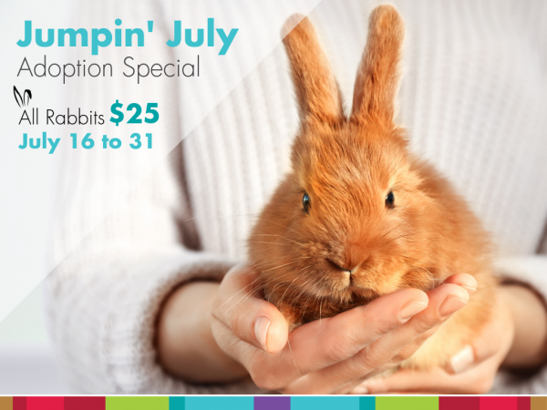 jumpin-july-rabbit-adoption-special