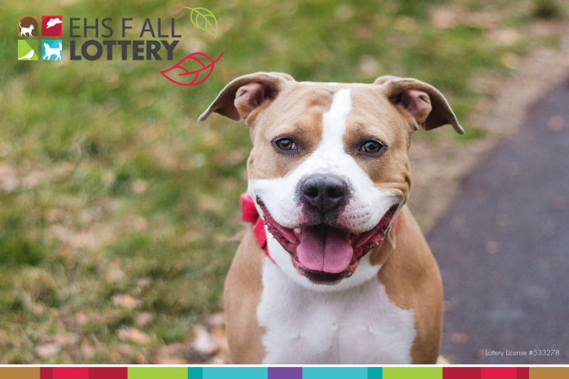 shelter-dog-promoting-fall-lottery-ticket-sales