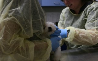 puppy-undergoes-medical-examp