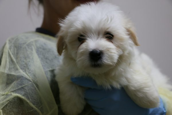 a-puppy-is-held-by-ehs-medical-staff