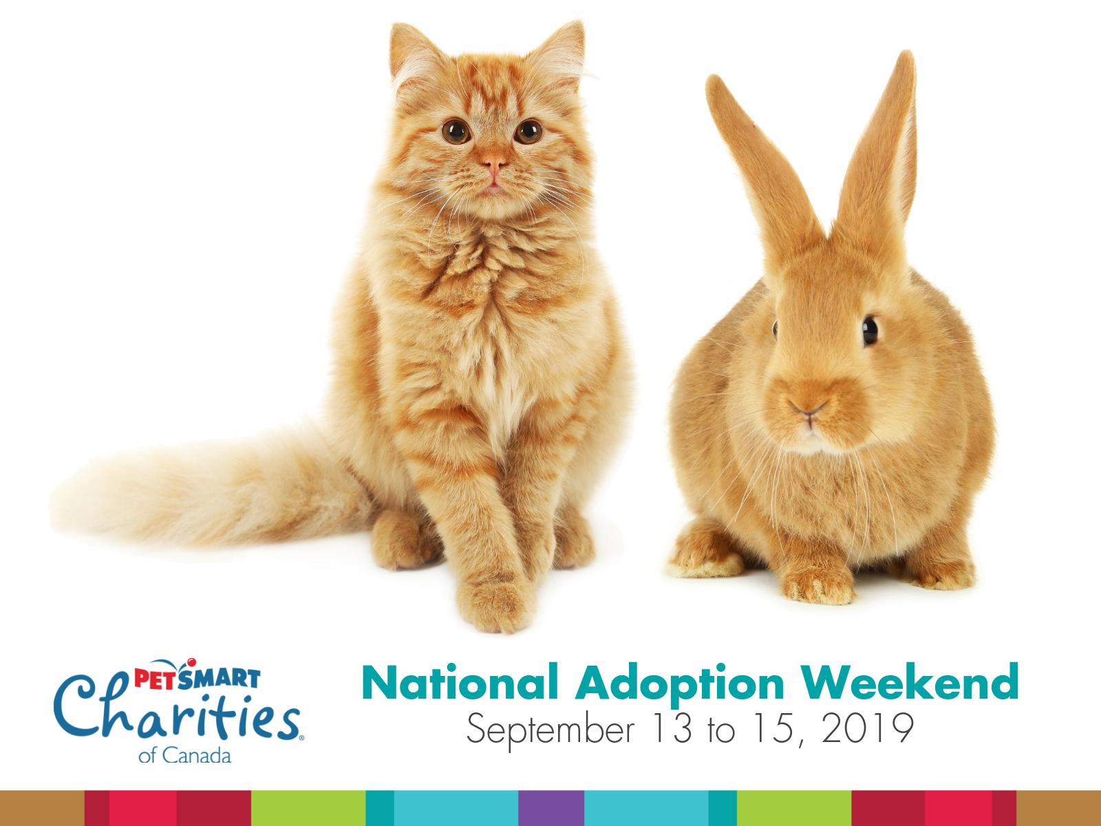 cat-and-rabbit-petsmart-adoption-even